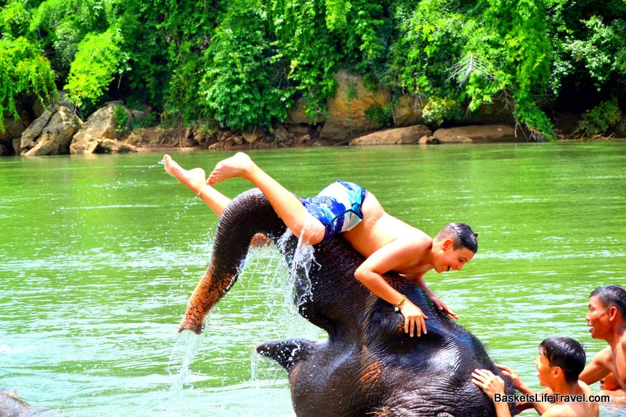 Swimming With Elephants Thailand Swimming With The Elephants