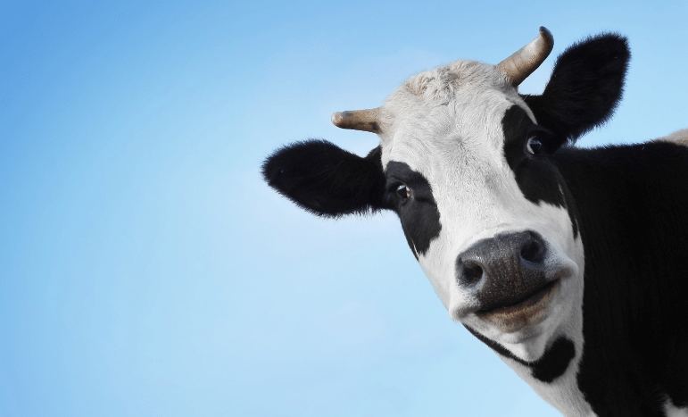 Переработчики молока могут остаться без отечественного сырья - эксперт