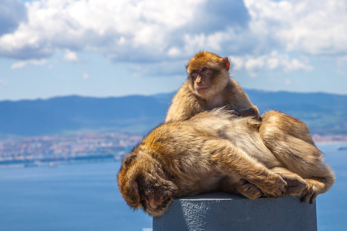 Things To Do In Gibraltar | Your Guide to Gibraltar Holidays